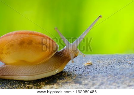 snail catch the concretebeautiful snail on the concrete in the morning