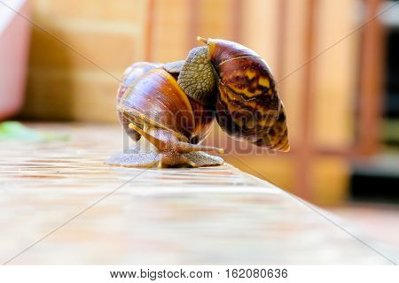 Helping each other sharing good relationship brings beauty. Concept Snail snail carrying another walk together.