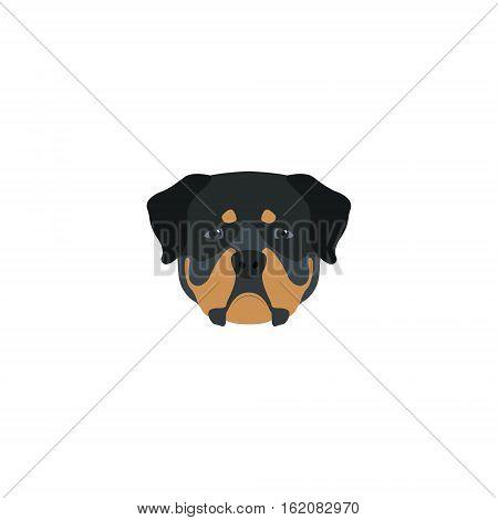 Head rottweiler dog on white background. Vector illustration.
