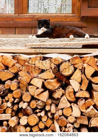 Cat lying on a window sill with under a woodpile
