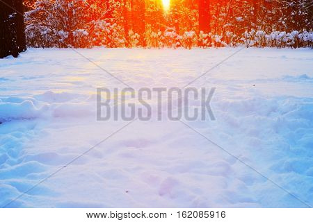 Wonderful winter landscape - in background through branches of snow-covered trees make their way to bright rays of departing sun and beautiful fall reflections on powdery white snow in foreground.