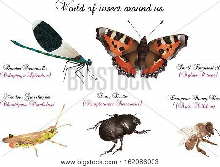 It is illustration of several insect around us.