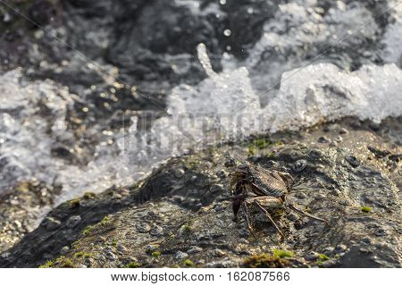 Detail of rocks on a coast. Texture of cliffs with a sea-shell crab. Amazing nature photo.