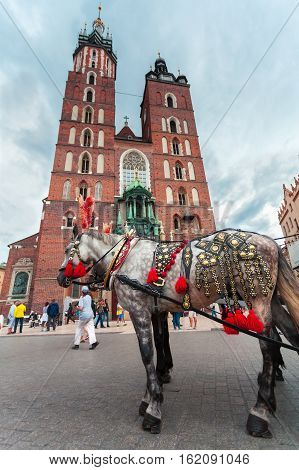 Church of St. Mary in the main Market Square on the background of dramatic sky and beautiful horse in the foreground. Basilica Mariacka. Krakow. Poland.