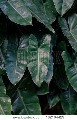 Low key lighting Nature background, green leaves in natural light and shadow