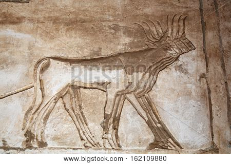 Ancient Egyptian engravings depicting bulls