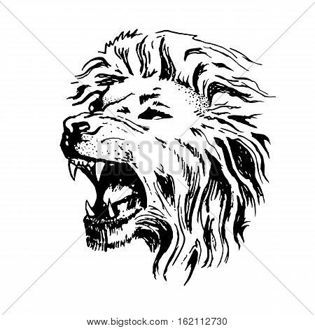 Sketch vector lion head. Open mouth grin isolated on white background.