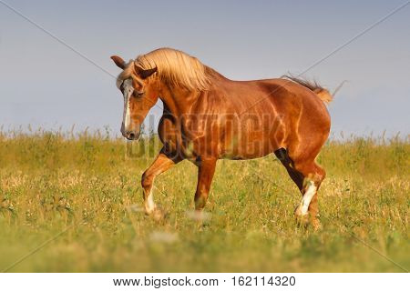 Red horse trotting in field against blue sky