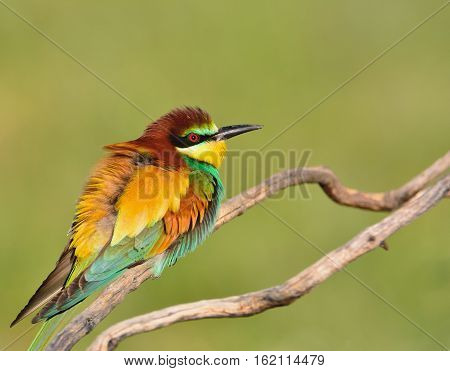 Close-up Of Bee-eater On Tree Branch
