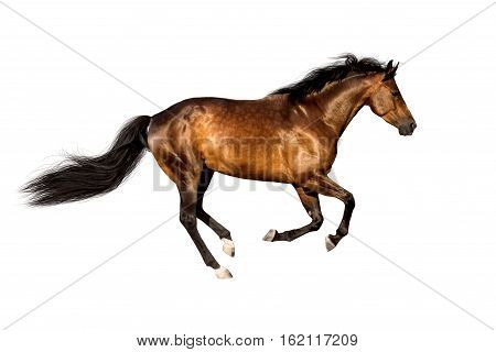 Bay horse run gallop isolated on white backround