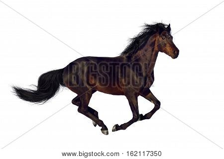 Bay horse run gallop isolated on white