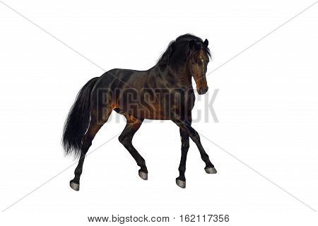 Bay horse trotting isolated on white backround