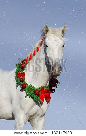 Christmas image of a white horse wearing a wreath and a bow