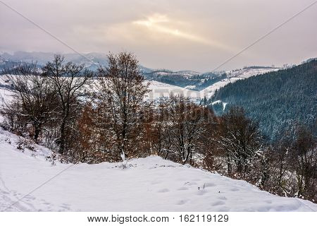 Forest In Rural Area In Winter Mountains