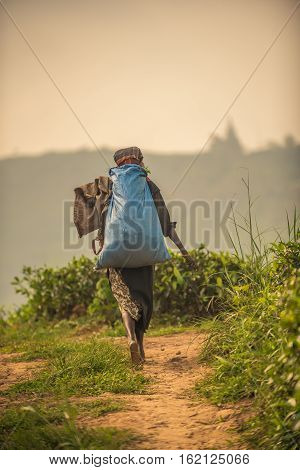 Sri Lanka: tea collector with a bag in tea plantation