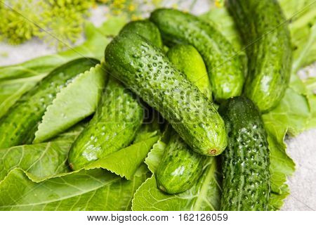 cucumber with inflorescence dill. food