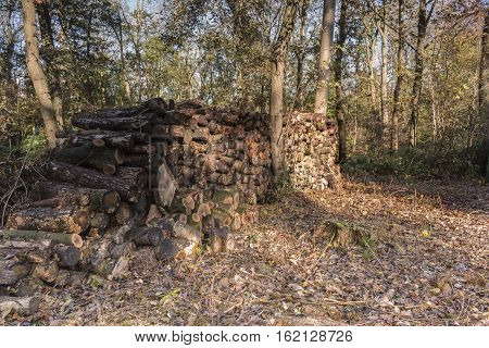An image of the sunlight on a stack of logs at Launde Woods Leicestershire England UK