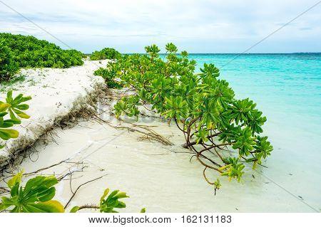 green plant on the beach of the Maldivian island