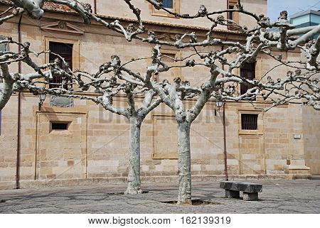 Interlocking trees.Romanesque building in the background. Zamora. Spain