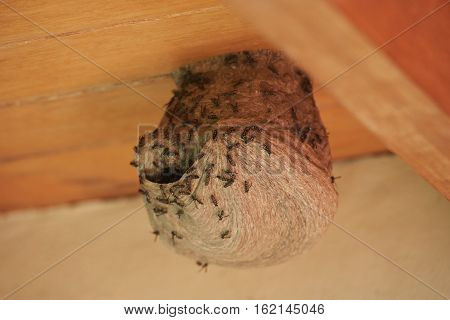 Round bee nest on wooden house roof horizontal orientation