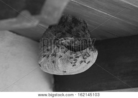 Wasps wild nest on home house roof in black and white colors