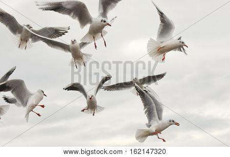 Seagulls flying with open wings over sky with clouds.