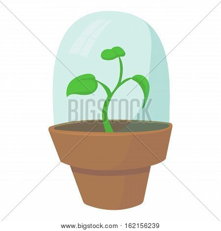 Greenhouse icon. Cartoon illustration of greenhouse vector icon for web design