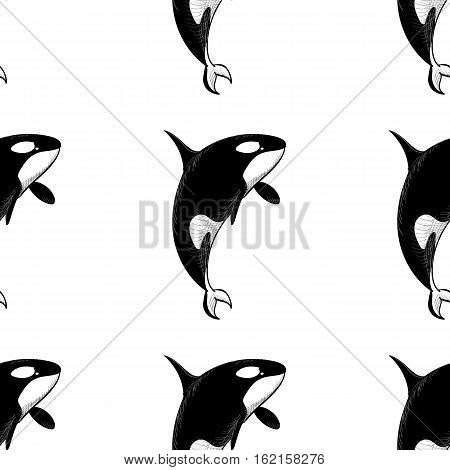 Grampus killer whale seamless pattern in doodle style on white background. Wild ocean animal wallpaper. Vector illustration for printing onto fabric.