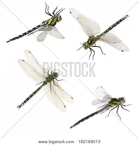 set of macro shots of dragonfly. isolated on white background
