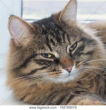 portrait of cat on window closeup