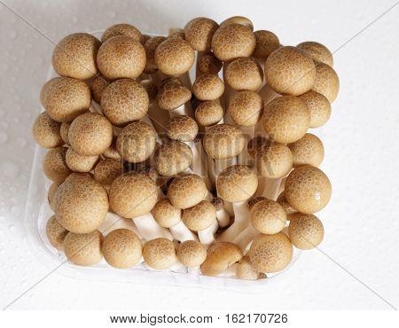 Beech Mushroom In The Package