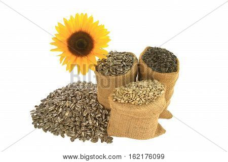 Different kind (sorts) sunflower seeds Black Oil known as well as bird seeds Striped and Hulled known as well unshelled in burlap bags (sacks) and spilled in front of sunflower bloom over white