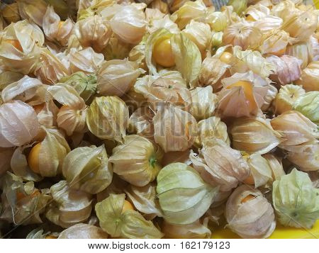 cape gooseberry fruit. Fresh cape gooseberry fruit Berries of a Cape gooseberry fresh fruit sour and sweet .