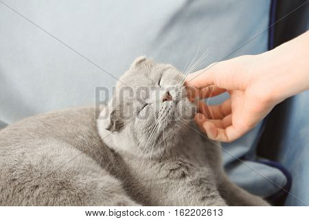 Owner stroking cute cat at home, closeup