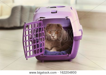 Cute funny cat in plastic carrier at home