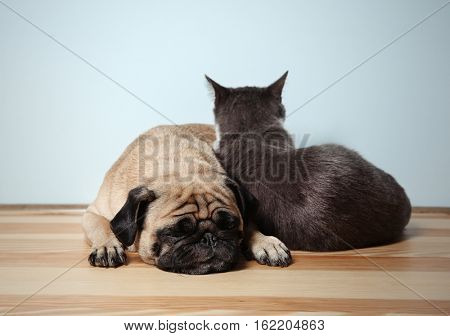 Adorable pug and cute cat together on floor