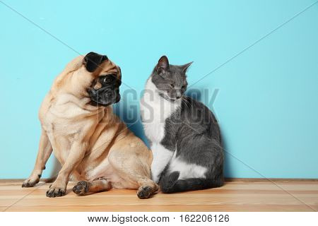 Adorable pug and cute cat sitting together on floor