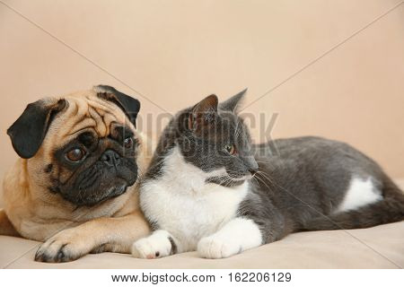 Adorable pug and cute cat lying together on sofa