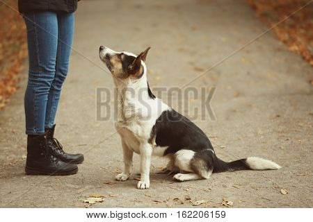 Woman and stray dog outdoors