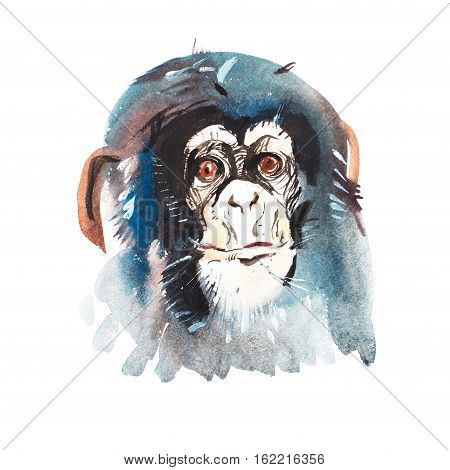 Watercolor portrait of grey furry chimpanzee. Aquarelle drawing 2016 symbol.