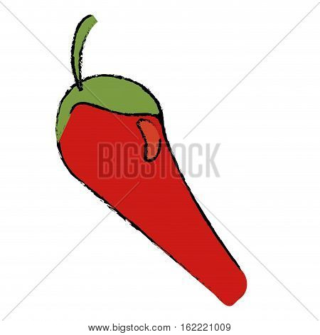 drawing chili pepper vegetable icon vectoe illustration eps 10