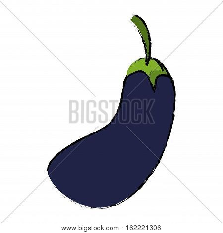 drawing eggplant natural vegetable icon vectoe illustration eps 10