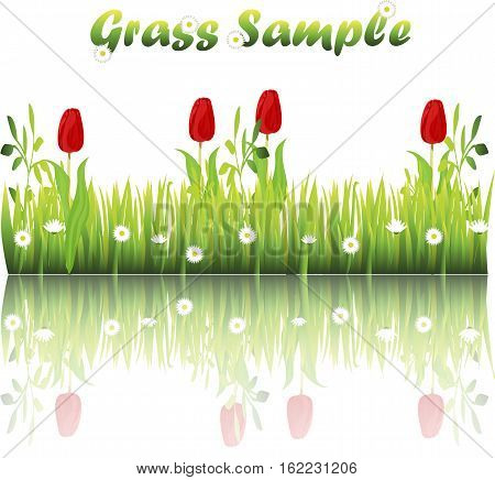 Very high quality original trendy illustration of grass with flowers, chamomile, tulip