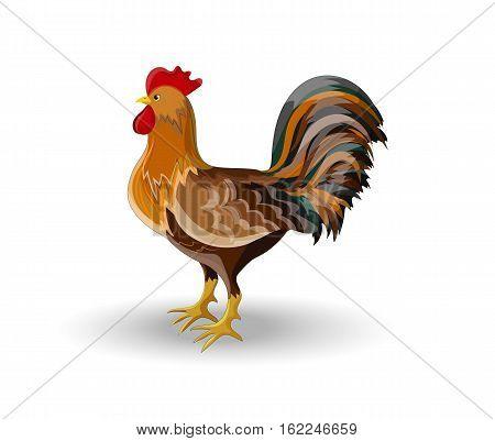 Rooster, Bird, Cockerel or Cock, Multicolor, Vector Illustration EPS 10