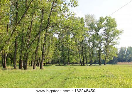 View on the green forest on spring