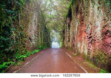 fairy tunnel in the woods of Rural Park Anaga in Tenerife Canary Islands Spain