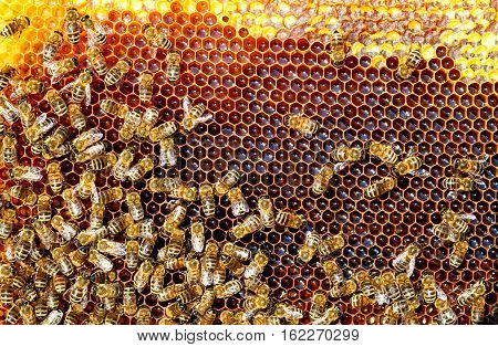 Bees in the hive convert nectar to honey. Honeycomb.