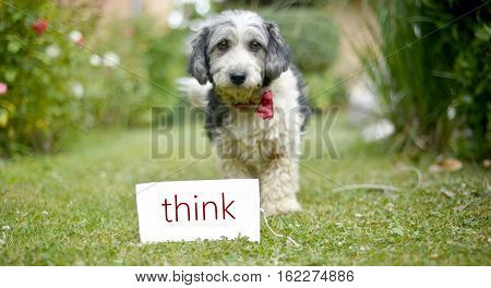 picture of a The cute black and white adopted stray dog on a green grassfocus on a head of dog. card with text think