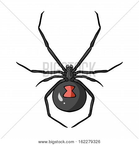 Black widow spider icon in cartoon design isolated on white background. Insects symbol stock vector illustration.
