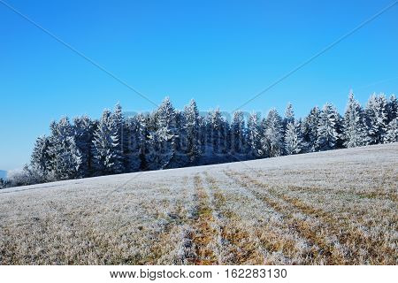 The first rays of the sun on the meadow. Cold morning in Sumava National park hills and trees in the fog and rime misty view on czech landscape blue winter scene. Winter landscape with trees with frost. Roast winter landscape frosted trees in the meadow.